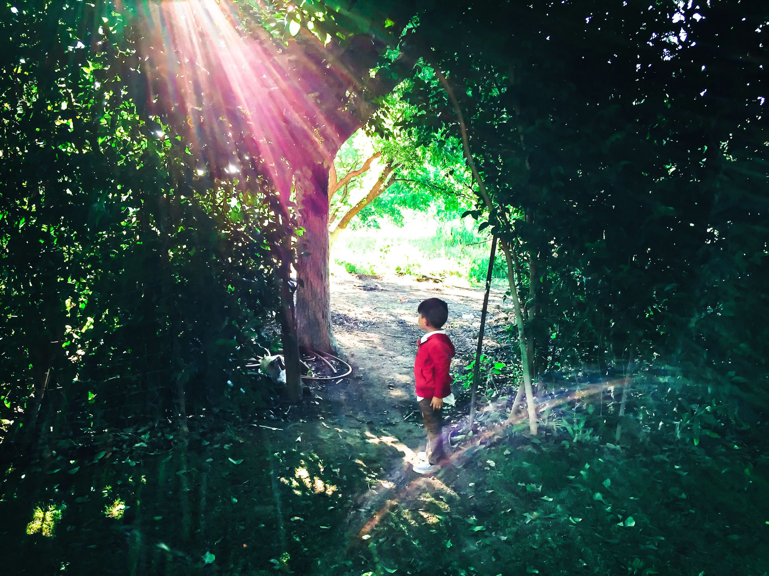 lifestyles, full length, leisure activity, tree, childhood, rear view, boys, sunlight, girls, casual clothing, walking, lens flare, standing, elementary age, growth, sunbeam, men, water