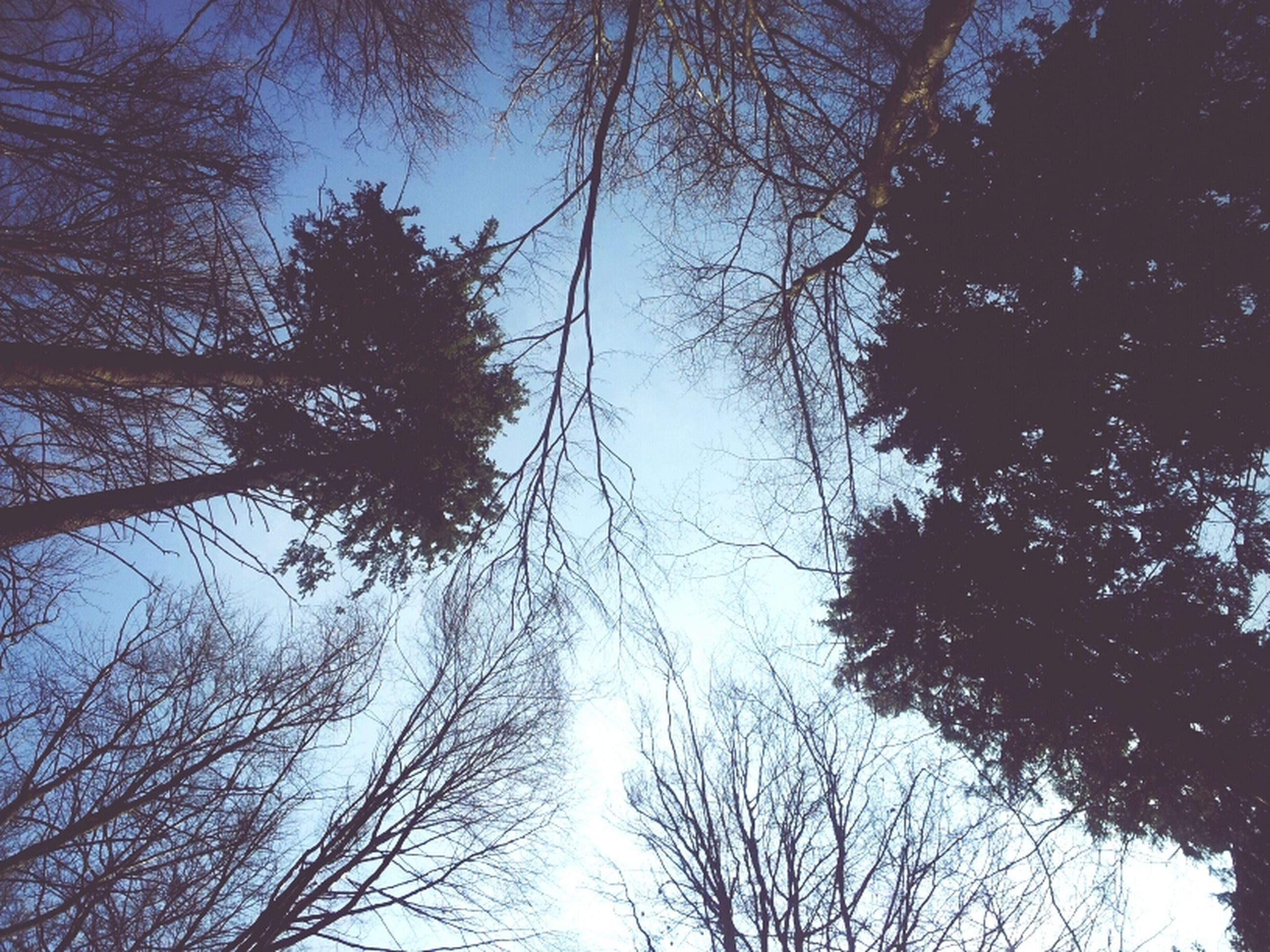 tree, low angle view, branch, tranquility, silhouette, bare tree, beauty in nature, nature, sky, growth, scenics, tranquil scene, clear sky, outdoors, tree trunk, no people, blue, day, forest, treetop