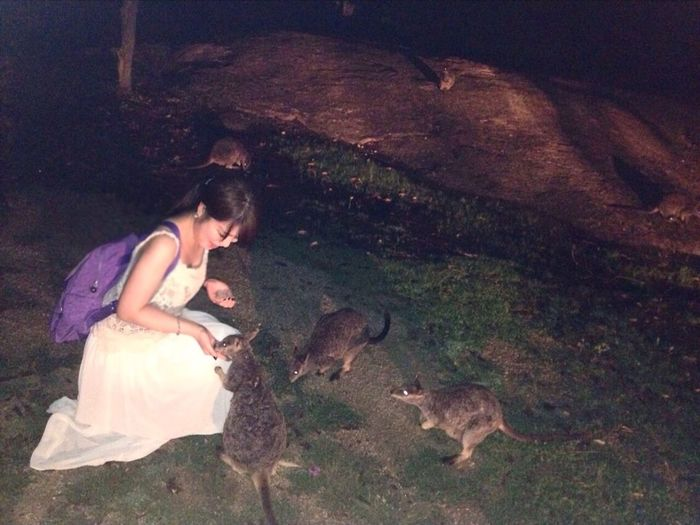 I took to feeding to wild wallabies ? in Cairns. Kawaiiiiii Australia Cairns Mareeba Wallaby