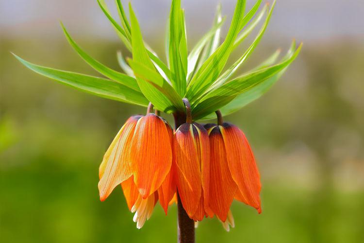Close-up of orange flower