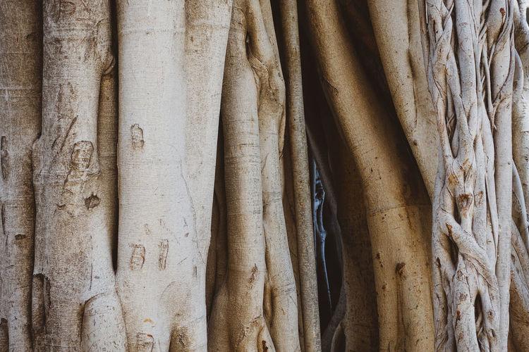 Full frame shot of bamboo hanging on tree trunk