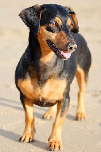 Joy Love♡ Family Dogoftheday Dogs Life Happy Rescuedog Spanish Dog Beach Sea Dog DogLove Freedom
