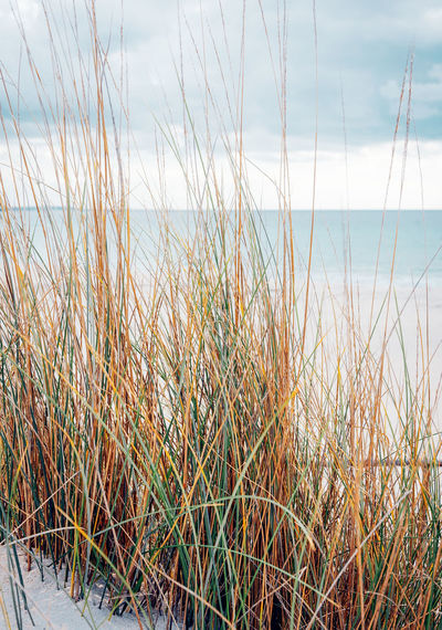 Beach Beauty In Nature Blade Of Grass Cloud - Sky Day Focus On Foreground Grass Growth Horizon Horizon Over Water Land Marram Grass Nature No People Outdoors Plant Scenics - Nature Sea Sky Timothy Grass Tranquil Scene Tranquility Water