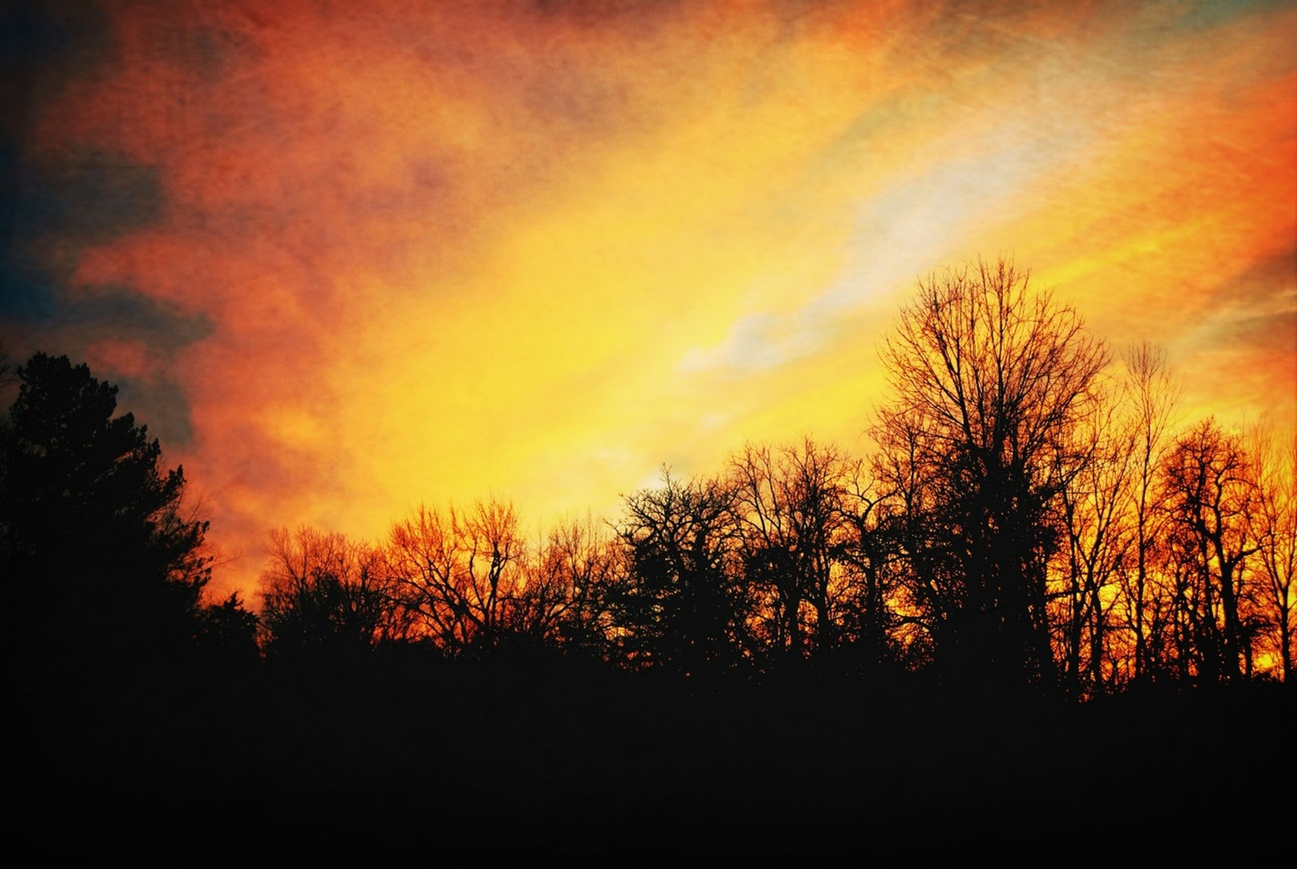sunset, silhouette, tree, orange color, sky, beauty in nature, tranquility, scenics, tranquil scene, nature, cloud - sky, idyllic, dramatic sky, bare tree, landscape, branch, growth, outdoors, low angle view, majestic