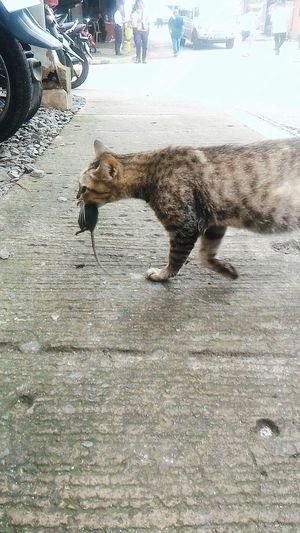 Asus Zenfone Photography Cats Of EyeEm Dead Rat