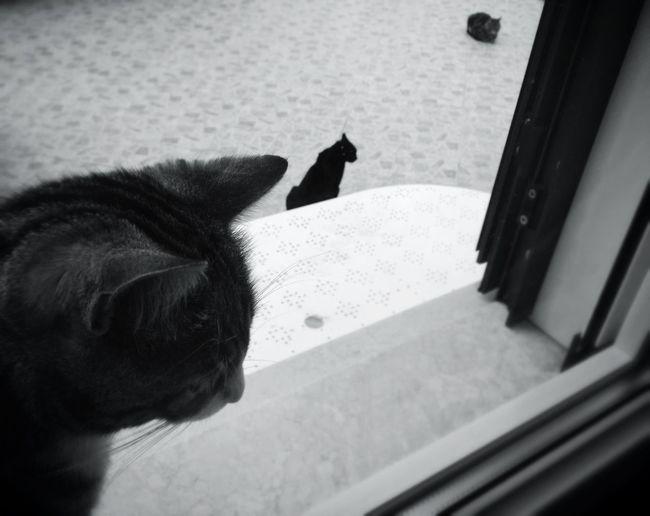 Cat Blackandwhite EyeEm Best Shots - Black + White Bw_collection