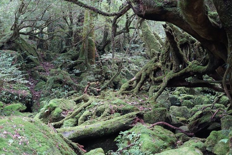 Plant Growth Tree No People Full Frame Beauty In Nature Moss