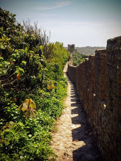 Adapted To The City Nature Growth Day Outdoors Green Color No People The Way Forward Plant Sky Beauty In Nature Portugal Óbidos  Walls Olympus Mirrorless Landscape Miles Away Resist The Great Outdoors - 2017 EyeEm Awards