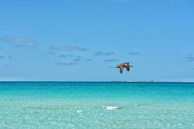 Blue Sea Flying One Animal Nature Animal Wildlife Animals In The Wild No People Outdoors Water Horizon Over Water Animal Themes Beauty In Nature Sky Day Pelican Cuba All Inclusive Carribean South Travel Destinations Beach Vacations Tropical Paradise