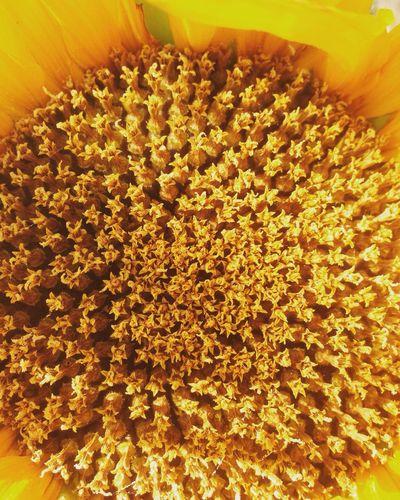 Nature Nature Full Frame Yellow Flower Head Day Flower