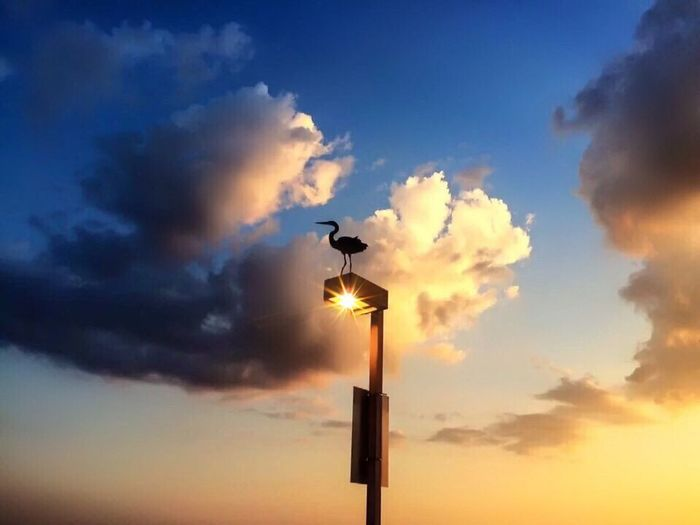 Bird's eye view Okaloosa Island Herron Florida