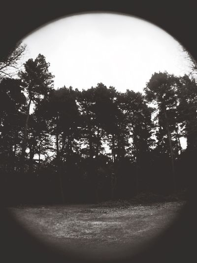 blair witch Blair Witch Project Nature Spooky Blackandwhite
