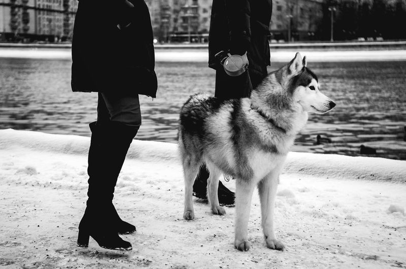 Dog Pets One Animal Human Body Part Standing Real People Outdoors Low Section Day Nature Husky Huskyphotography Blackandwhite Dogs Dog Portrait Dogwalk Snow Cold Temperature Animal Themes Winter