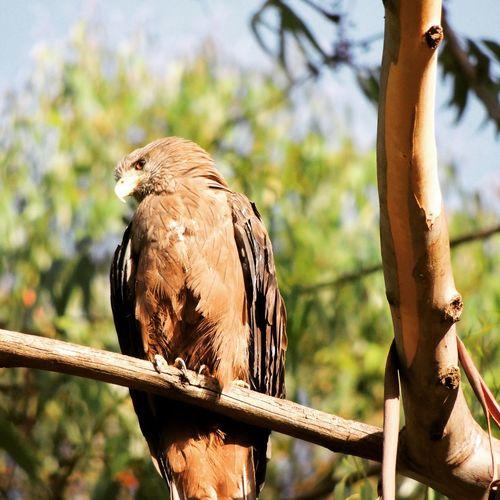 Hawk eye Eagle Eagle Eye Sunlight Wildlife Photography Nairobi Nairobi National Park Wildlife & Nature Photography Wildlife Wildlife Photos Kenya Branch Beauty In Nature