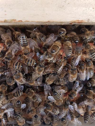 Bienen Insect No People Bienen🐝 Bienenzucht Bienenwabe Biene 🐝 Bienen  Fotografie Imker Bee 🐝 Bee