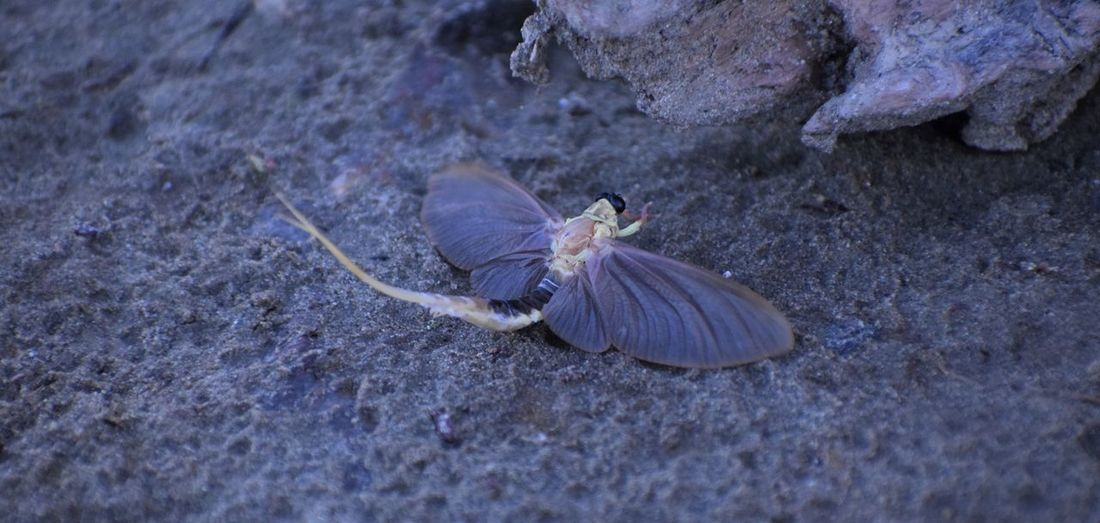 Riverside Animal Themes Beauty In Nature Insect Mayfly Nature Animal Wildlife Beauty In Nature Outdoors