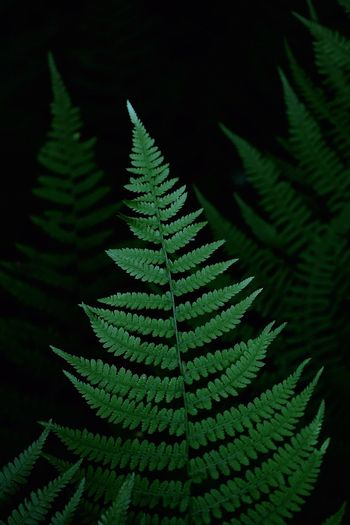 Close-up of fern leaves in forest at night