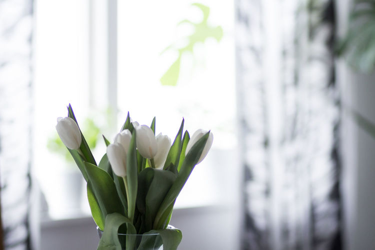 Plant Freshness Flower Flowering Plant Beauty In Nature Window Close-up Vulnerability  Nature No People Fragility Growth Indoors  White Color Focus On Foreground Day Green Color Plant Part Leaf Houseplant Flower Arrangement Home Style Tulips White