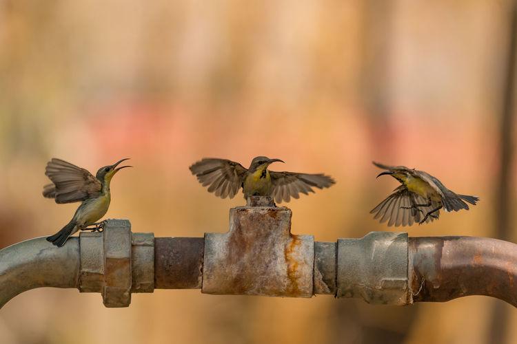 Close-Up Of Three Hummingbirds