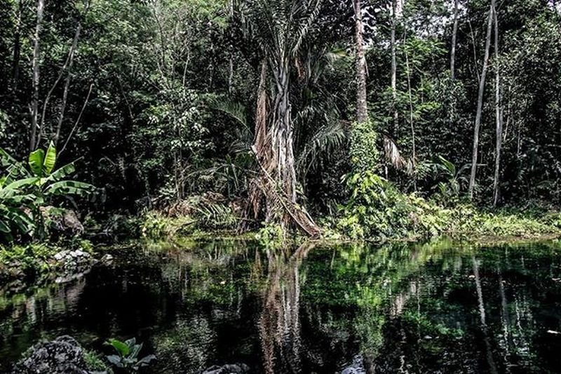 Selamat Pagi 😊 Lokasi : Telaga Nilem Cirebon  Majalengka Telaganilem Landscape Ciayumajakuning