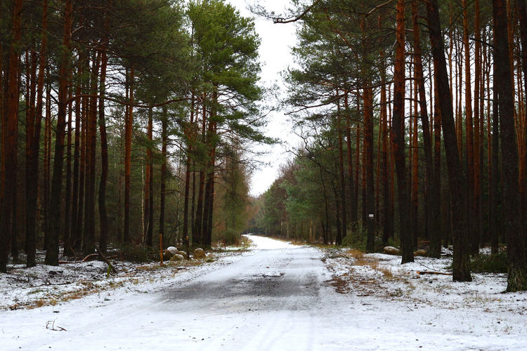 Road Amidst Trees In Forest During Winter