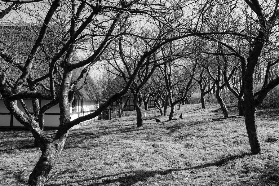 Garden Trees Old House Blackandwhite Black And White Black & White