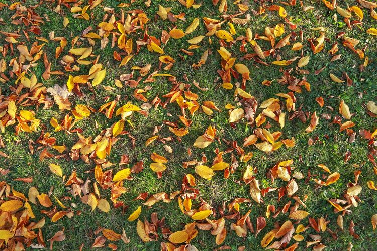 High angle view of maple leaves on road