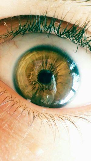 Eye Browngreeneyed  Nofilter Follow4follow Goodnight First Eyeem Photo Instapic Macro