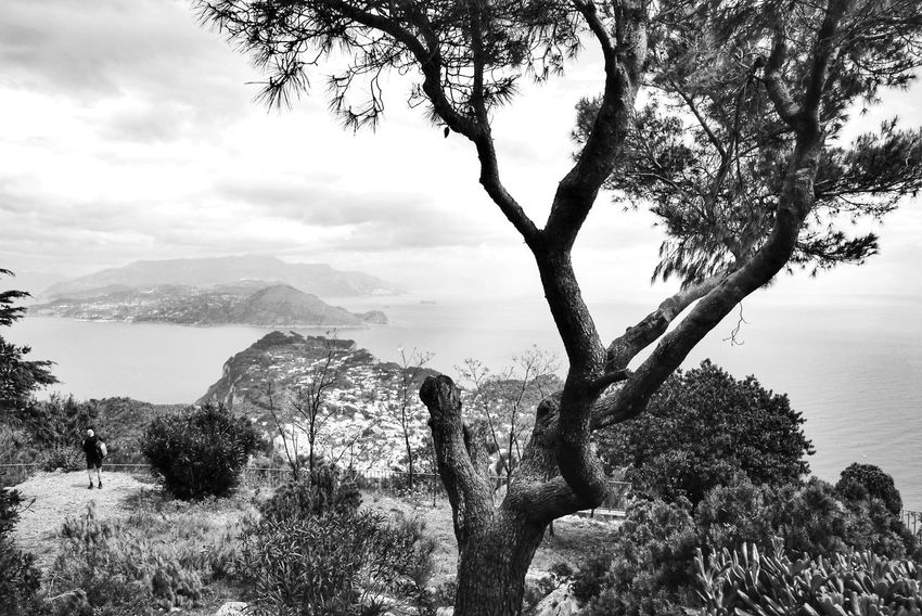 Tree Branch Nature No People Growth Tranquility Beauty In Nature Sky Tree Trunk Mountain Outdoors Cloud - Sky Day Capri Italy Monochrome Photography My Year My View Landscape