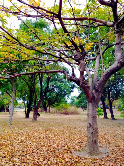 Trees Defoliation Park