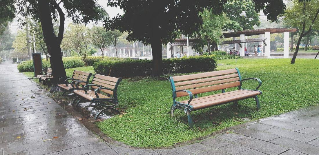大雨 & I enjoyed it here.. 😍 Raining Thunderstorm Taipei Outdoors Greenpark Love Streetstyle Alhamdulillah Songshan Taiwan Tree Water Park - Man Made Space Grass Sky Green Color Park Bench