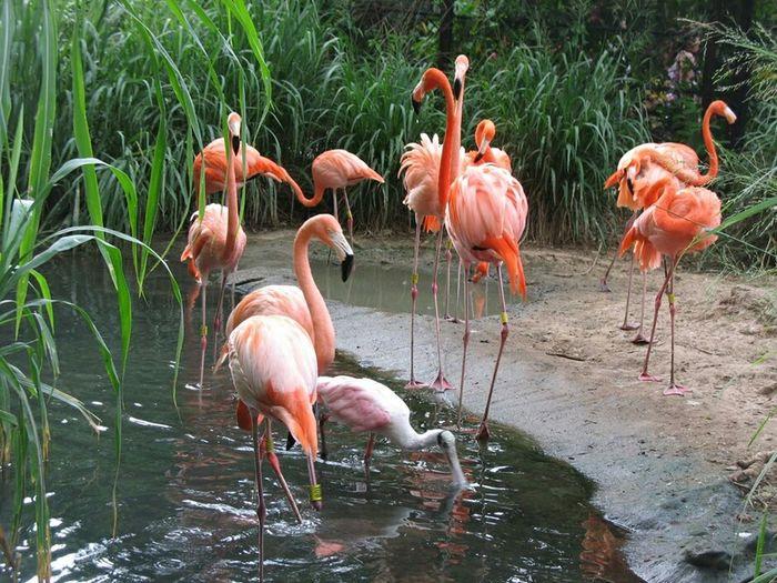 Parque natural de los flamingos. La Guajira Colombia. Parques  Nature_collection Animal Nature Aves Flamingos Colombia ♥  Turism Guajira