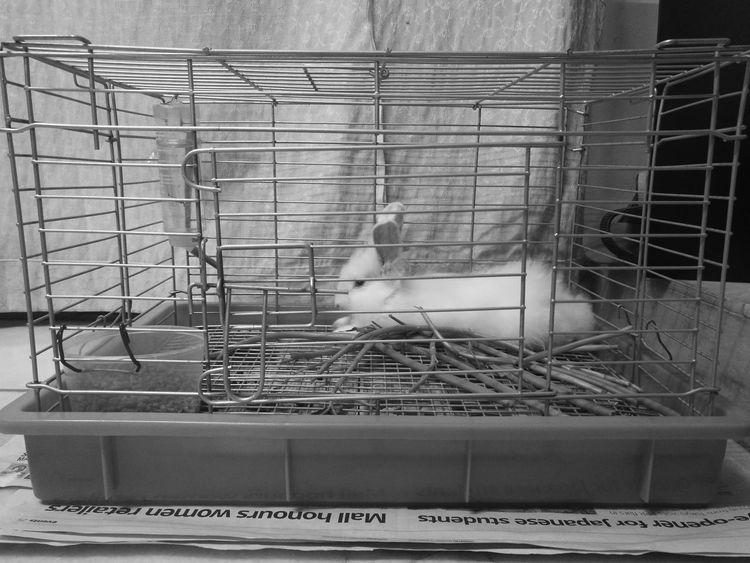 My pet : Snowball 🐰🐰🐰 Rabbit 🐇 Animal