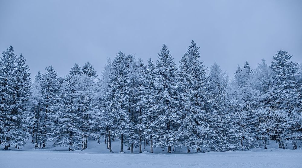 Snow Tree Winter Cold Temperature Scenics Blue Pine Tree White Color Landscape Nature Forest Tranquil Scene Beauty In Nature Frozen Frost Rural Scene Coniferous Tree Sky No People Tranquility