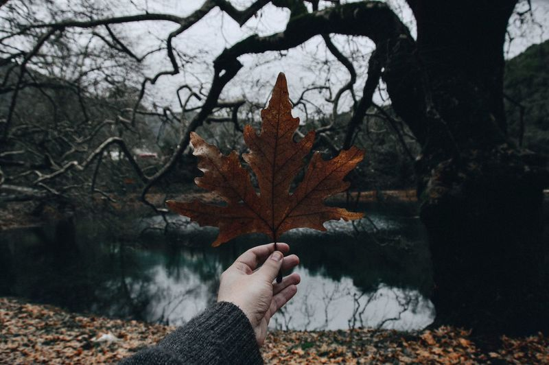 Autumn Leaf Change Human Hand Nature Real People One Person Tree Dry Maple Leaf Personal Perspective Holding Outdoors Maple Day Human Body Part Beauty In Nature Focus On Foreground Bare Tree Cold Temperature Shades Of Winter