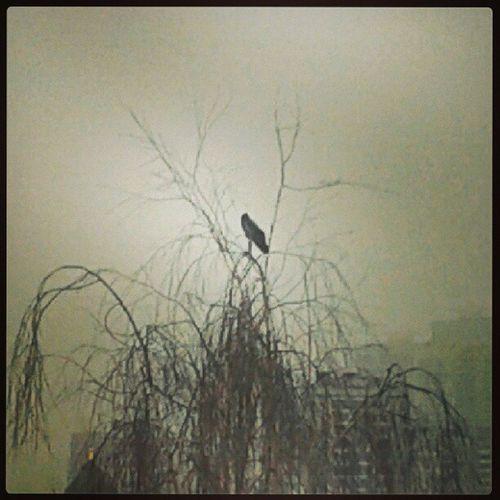 RUDN Pfur Tree Bird top