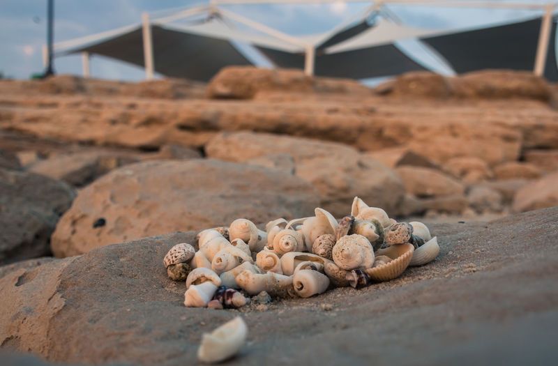 Close-up of shells on sand