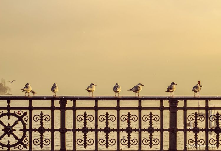 Seagulls perching on railing against clear sky