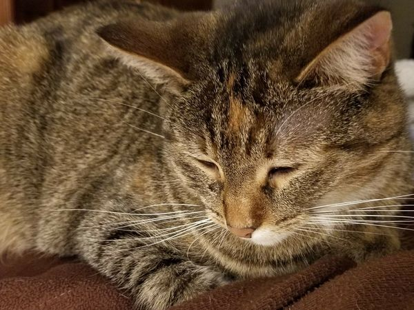 my kitty My Kitty Cat Cat Lounging Cloe Up Of Cat Close Up Of Kitten Animal Themes Mammal Indoors  Domestic Cat Close-up No People Portrait Domestic Animals Animals In The Wild Pets Feline Day