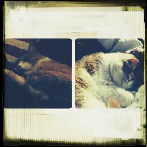 My cuties ❤️