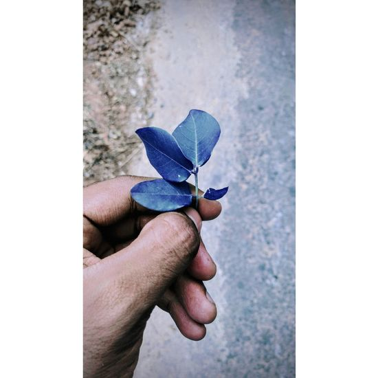 I say blue One Person Human Hand Day Outdoors Real People Close-up Tree Life Photooftheday Travel Photography Beauty In Nature Hello World Nature Beautiful World Different Peace Love EyeEmNewHere Wonderful Happiness Bonding Colors EyeEm Selects