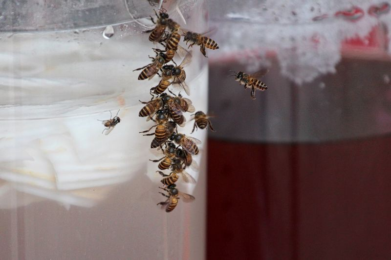 Close-up of bees on glass jar with drink