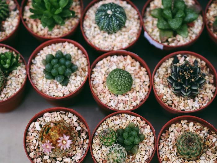High Angle View Of Various Succulent Plants On Table
