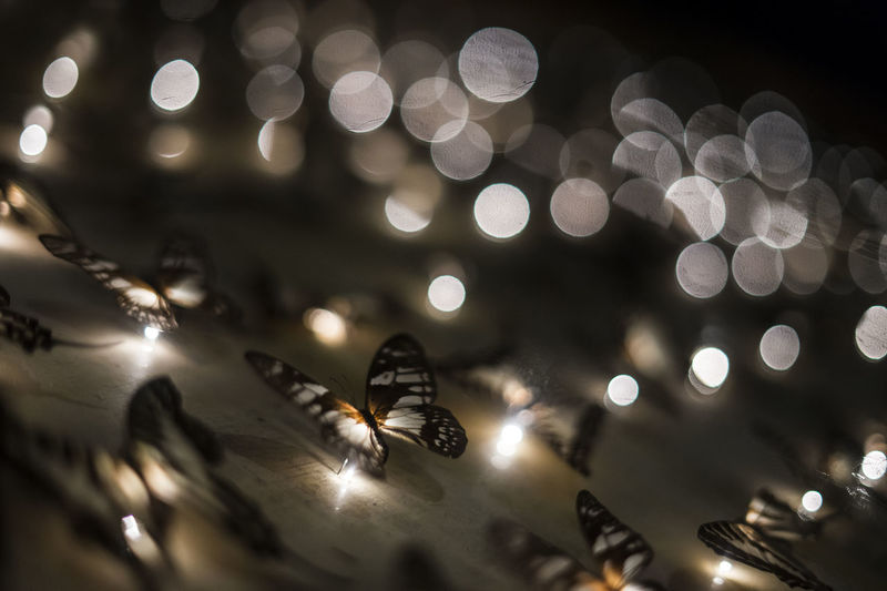 Close-up Of Illuminated Butterfly Fairy Lights On Wall