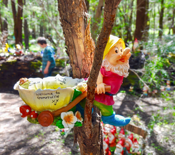 Gnome in tree with tourists at the Gnomesville forest in Wellington Mill, Western Australia. Closeup Colorful Creativity Fantasy Ferguson Valley Figurines  Focus On Foreground Forest Garden Gnomes Gnomes Gnomesville Man Made Object Nature Quirky Tourist Tourist Attraction  Travel Destinations Tree Trunk Trees Vibrant Color Wellington Mill Western Australia Whimsical WoodLand Woods