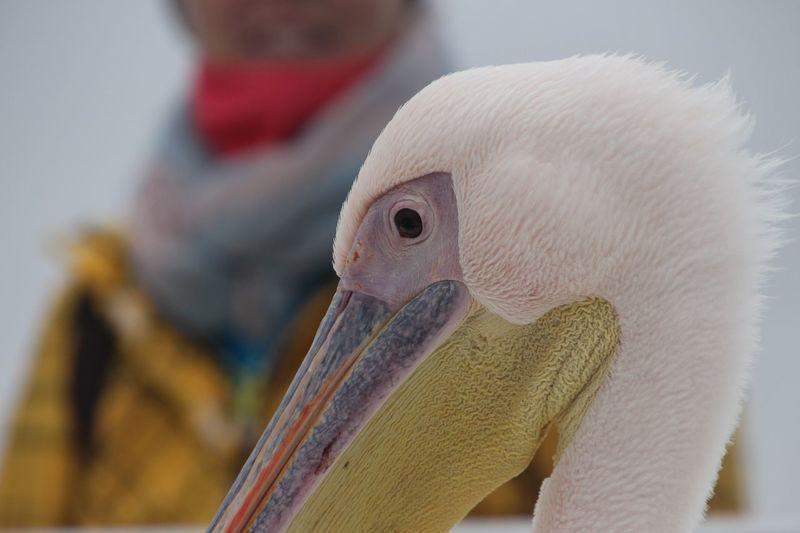 Pelican EyeEm