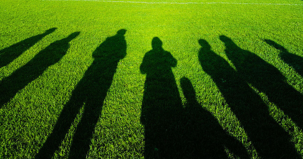 Shadow of trees on field