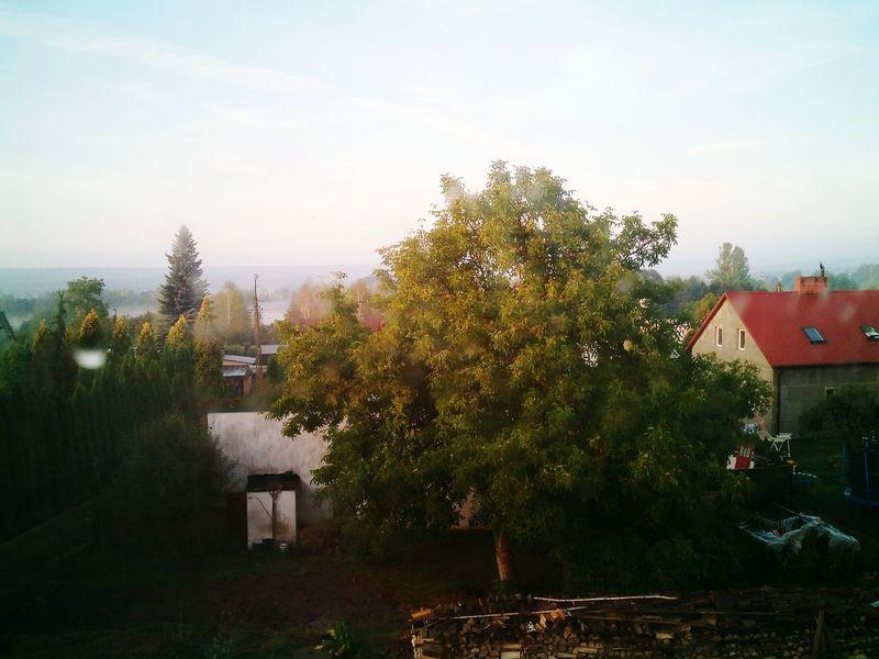 Tree Village First Eyeem Photo