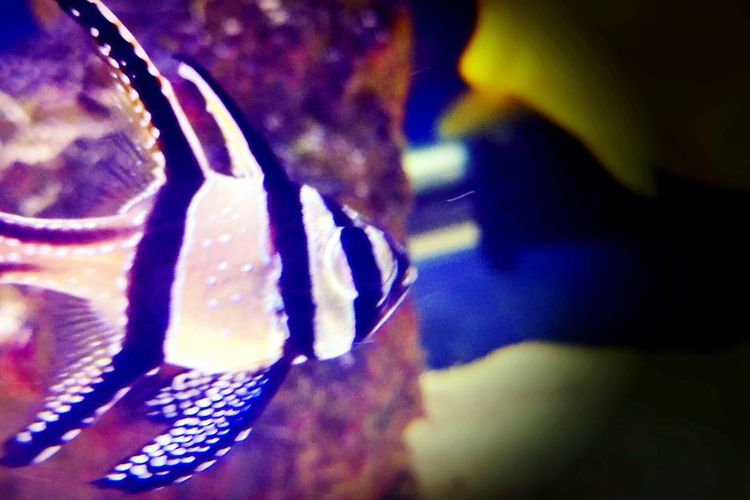 Close-up Night Water Sea Saltwater Fish Nature UnderSea Aquarium Fish Pattern Aquarium Fish Indoors  Multi Colored Aquarium Life Sea Life Cardinal