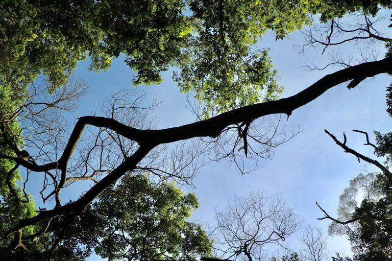 EyeEm Tree